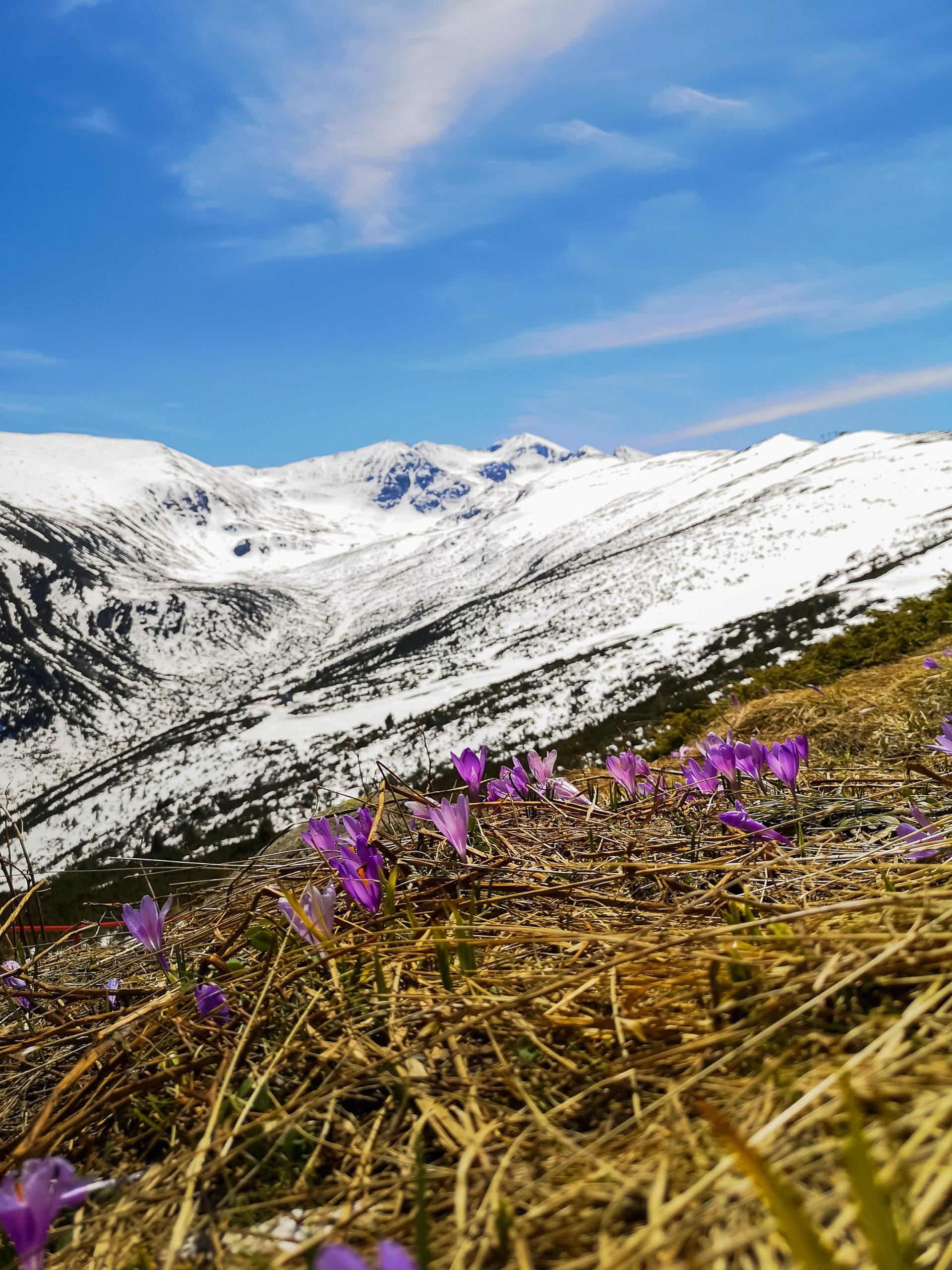 Заснежена планина